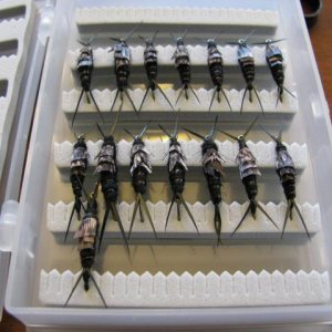 15 little stoneflies waiting to be mailed.